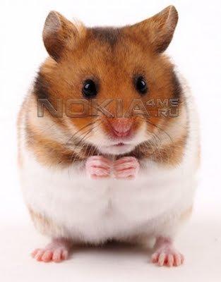Talking Hamster - Говорящий хомяк для Symbian^3, 9.4